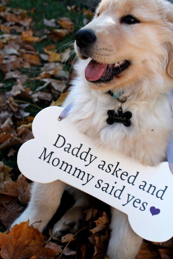 save-the-date-mascotas